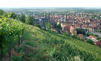 image 1 Alsace - Riesling